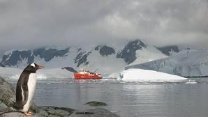 Un incremento del hielo marino sería perjudicial para los pingüinos Adelaida de la Antártida