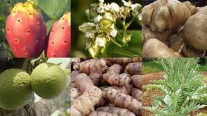 Seis «super cultivos» que combaten la malnutrición y las enfermedades