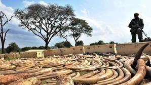 Piden sanciones para Mozambique, Tanzania y Vietnam por no impedir el tráfico ilegal de marfil