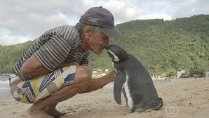 Un pingüino nada 5.000 millas cada año para pasar una temporada con el hombre que le salvó la vida