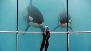 Cetáceos: ¿Por qué Sí/No deben mantenerse en cautividad?