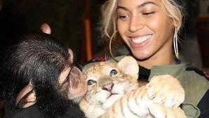 Los selfies de famosos con primates lastran los esfuerzos conservacionistas