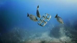 Diseñan unas anillas biodegradables para las latas que evitarán el estrangulamiento de tortugas y peces