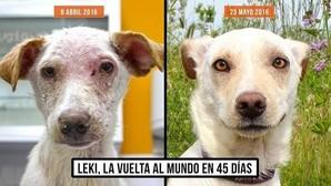 Leki, el perro abandonado y cubierto de llagas al que una protectora le ha devuelto la vida