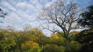 La FAO presenta el primer estudio sobre la presencia y extensión de los árboles en las zonas áridas