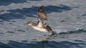 Cuatro de los santuarios para las aves más amenazados del planeta están en España