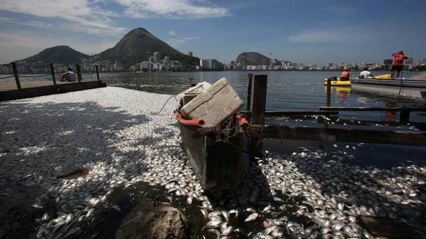 Peces muertos en Brasil