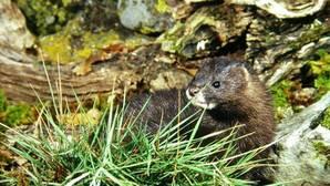 Lista Roja: no mejora el estado de conservación para ninguna especie en España