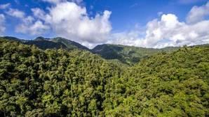 Desafío de Bonn: la comunidad internacional se aproxima a la meta de los 150 millones de hectáreas restauradas para 2020