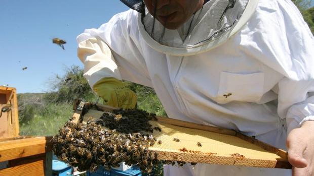 Apicultores de EE.UU. alertan sobre la muerte de millones de abejas por un insecticida para combatir el Zika