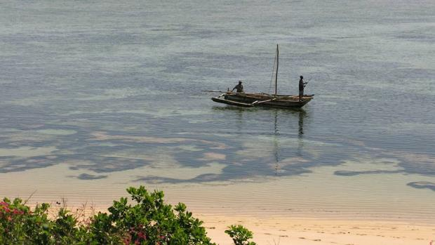 El calentamiento oceánico ya está afectando a los ecosistemas, desde las zonas polares hasta las regiones tropicales,