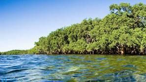 La comunidad internacional, cerca de cumplir las Metas de Aichi para la Biodiversidad en 2020