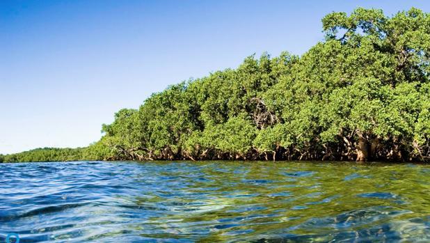Manglares: su conservación es fundamental para asegurar los Objetivos del Milenio en 2030