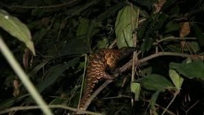 Repunta el comercio ilegal de vida silvestre: 7.000 especies estarían en peligro