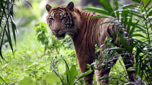 Considera uno de los mamíferos con mayor peligro de extinción a nivel global