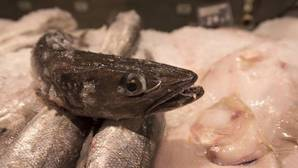 Uno de cada cinco pescados está mal etiquetado, denuncia Oceana