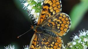 Los compromisos de Hawái en materia de conservación