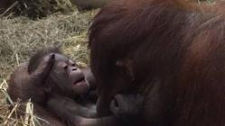 Batang ha sido «entrenada» para la maternidad durante 3 años