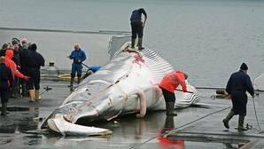 Océanos: cuánto mayor es el tamaño corporal de la especie, mayor es la amenaza de extinción