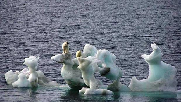 Un buque de navegación pudo acercarse a la isla para suministrarles bengalas y perros a los científicos rusos acechados por un grupo de osos polares en el Ártico