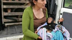 Jane Goodall: «Los bebés chimpancé enfermos que llegan al Centro de Rehabilitación son los afortunados»