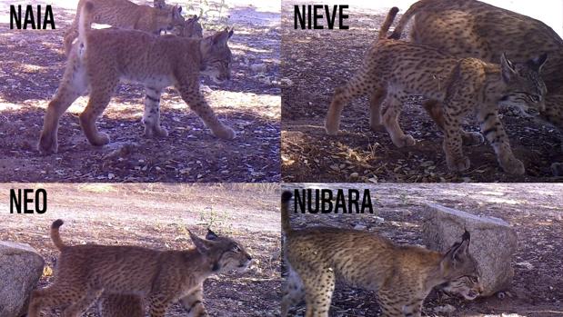 Naia, Nubara, Neo y Nieve vinieron al mundo en junio