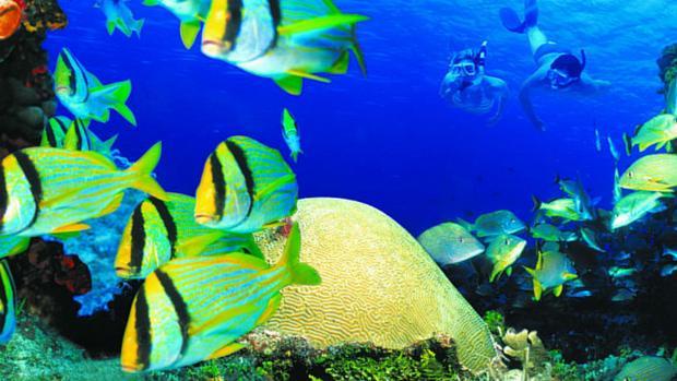 Parque Nacional Arrrecifes de Cozumel