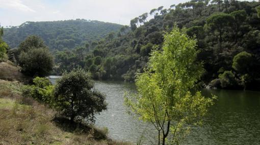 Se han instalado plataformas de control del visón americano en los ríos de Ávila, Cáceres, León y Zamora