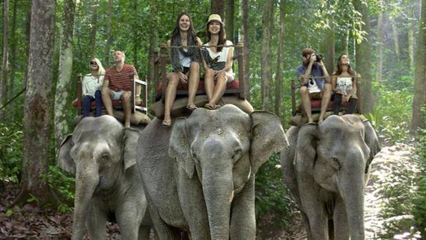 Un grupo de turistas pasea en elefante a través de un bosque