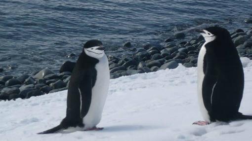 Una pareja e Pingüino barbijo