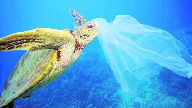 Al menos 170 especies marinas ingieren restos antrópicos