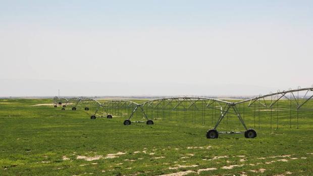 La agricultura será una cuestión prioritaria en la próxima Cumbre Climática, que acoge Marruecos en noviembre.