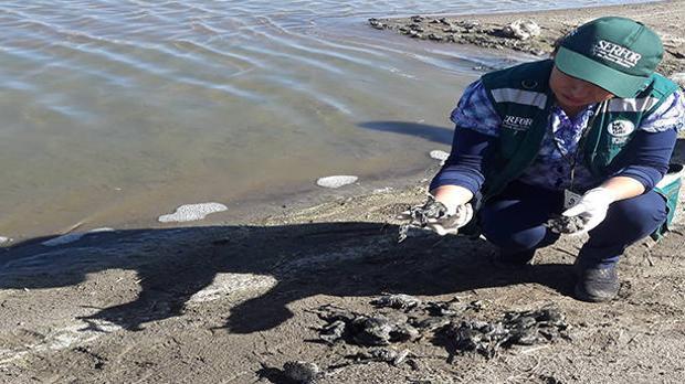 La voz de alarma la dio, en primera instancia, el Comité de Lucha contra la contaminación del río Coata