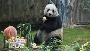 Muere «Jia Jia», el oso panda más longevo del mundo