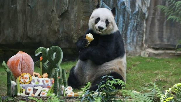 Jia Jia engendró seis crías durante su cautiverio en un parque de atracciones de Hong Kong