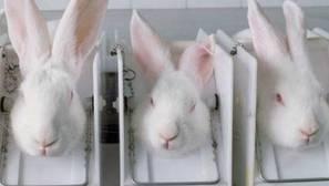 Taiwán prohibirá que los cosméticos se prueben en animales a partir de 2019
