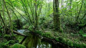 Desciende de forma alarmante el número de especies autóctonas que viven en los ríos
