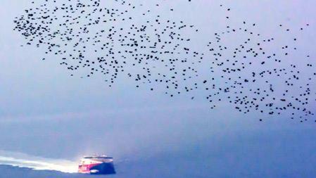 Seguimiento de la migración postnupcial de aves a través del estrecho de Gibraltar desde julio hasta octubre de 2016