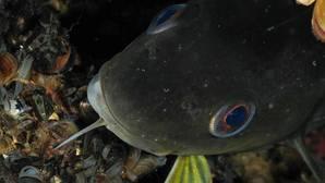 Habría cinco millones de toneladas de peces más en las aguas europeas si se gestionaran mejor