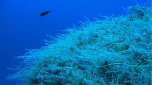 El cambio climático aumenta el apetito de los peces y reduce los bosques de algas