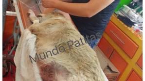 Atropella de forma intencionada a un perro callejero en México, sin saber que le estaban grabando