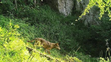 La observación de fauna como actividad turística contribuye a la educación ambiental y el desarrollo económico de las comunidades rurales