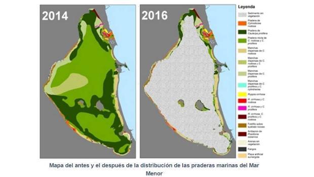 La extensión de praderas marinas del mar Menor ha descendido en un 85% en los dos últimos años