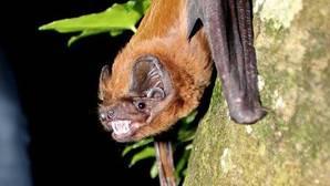 Algunos murciélagos son capaces de ingerir más de un millar de insectos cada noche