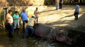 «Gustavito» llegó al Parque Zoológico Nacional de El Salvador en 2004