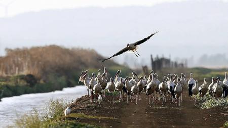 Hoy, 10 de mayo, se celebra el Día Mundial de las Aves Migratorias