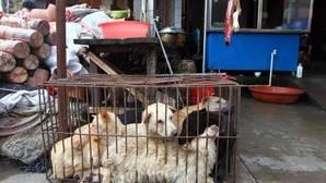 El Festival de la Carne de Perro de Yulin se celebra cada solsticio de verano desde 2010
