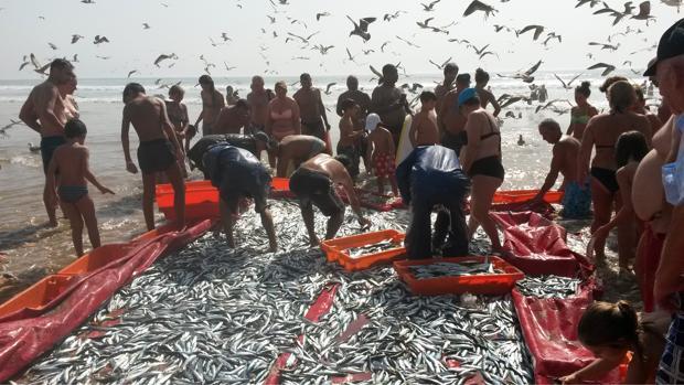 China, Indonesia y Egipto son los tres principales países productores acuícolas de tilapia