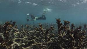 La Gran Barrera de Coral de Australia vale el equivalente de doce Casas de la Ópera de Sídney
