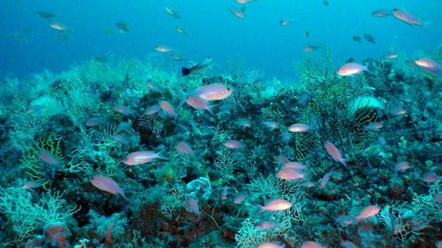 Algunas especies marinas han decrecido hasta un 90% en las últimas décadas
